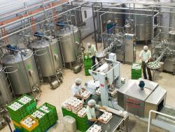 طرح توجیهی تولید شیر، ماست، خامه پاستوریزه